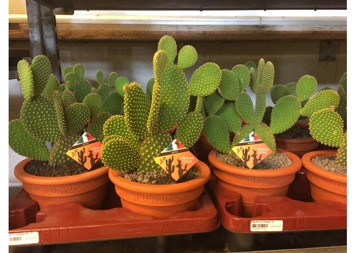 Kaktus #10